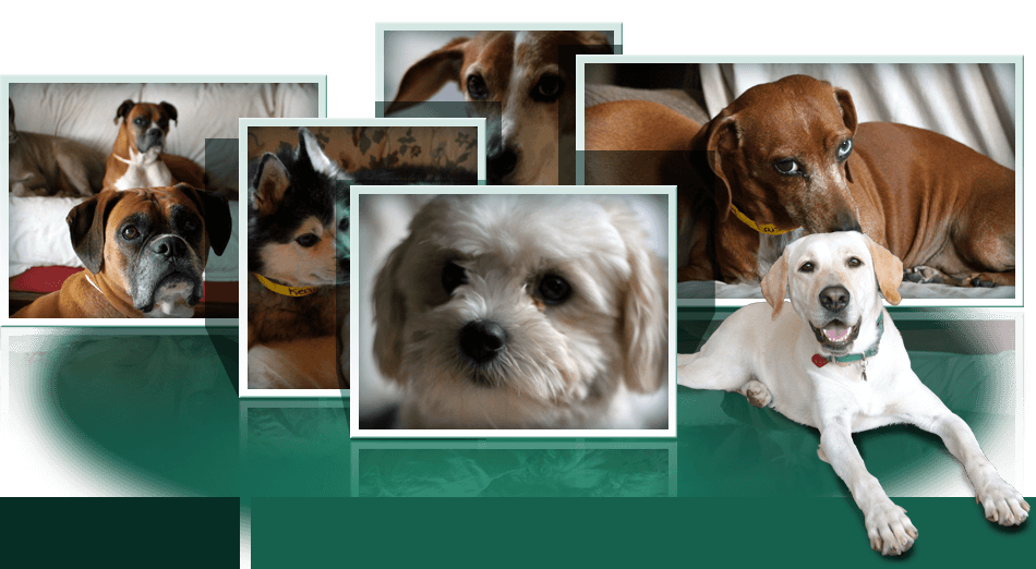 Collage of Dogs 2